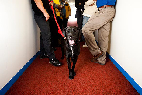 Bed Bugs Sniffing Dogs Los Angeles